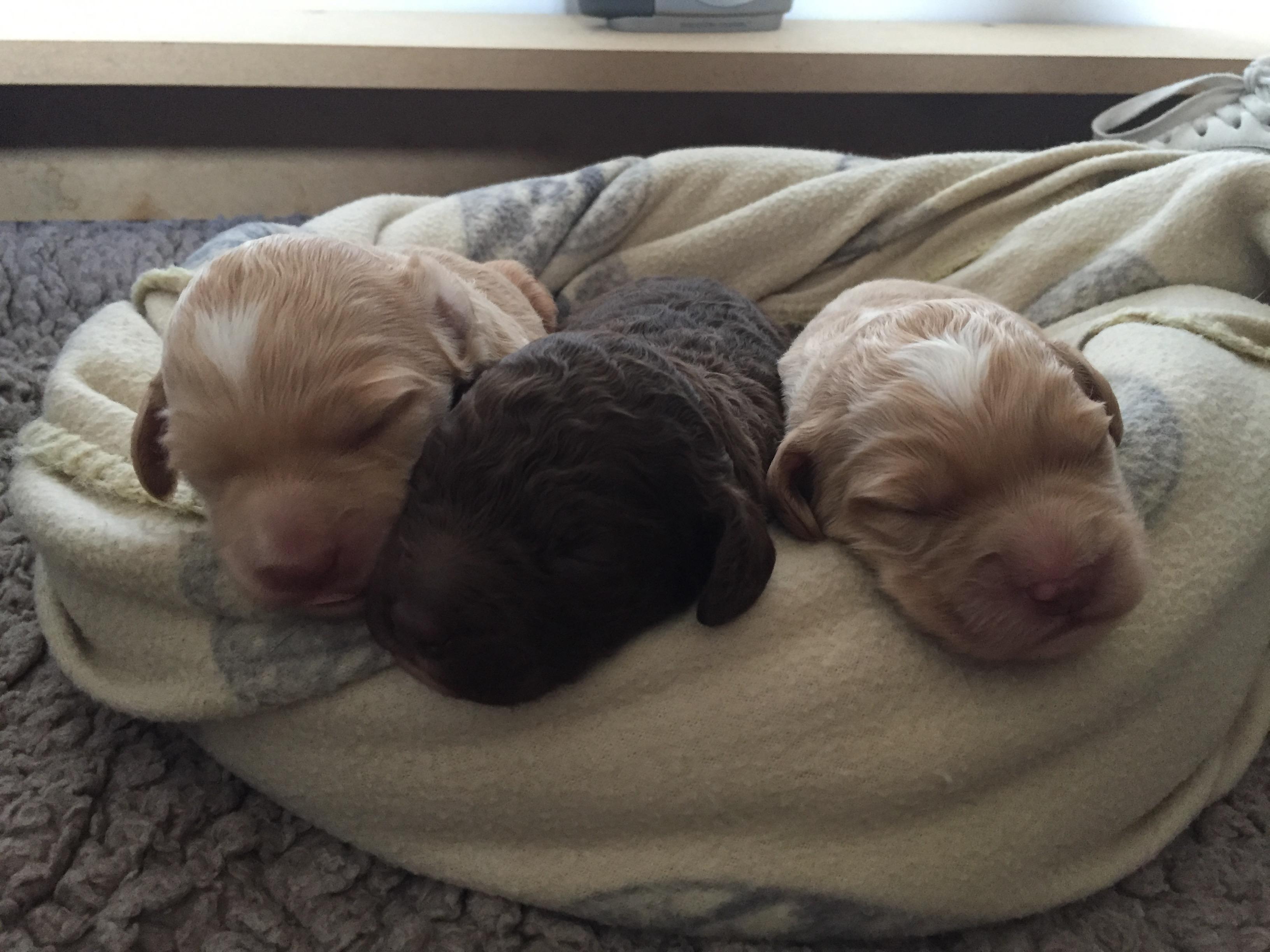 De puppy's van Mae zijn geboren!