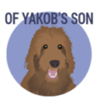 Of Yakobs Son Labradoodles